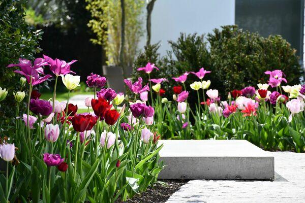 Triggerende tulpen